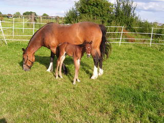 Featured Bader Grant Recipient Emma Stevens' horse River as a foal with his mother, Fudge